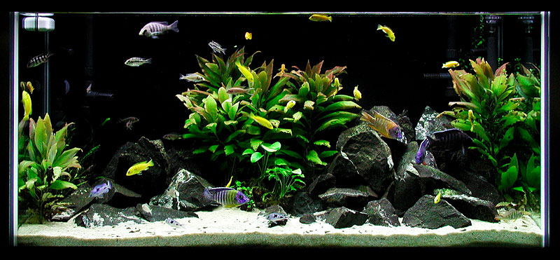 Is white sand problematic the planted tank forum for Black sand fish tank